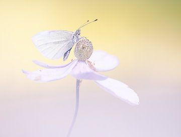 Zarte rosa Blume mit Schmetterling von natascha verbij