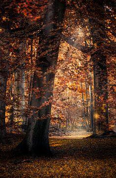 Herfstsfeer sur Klaas Fidom