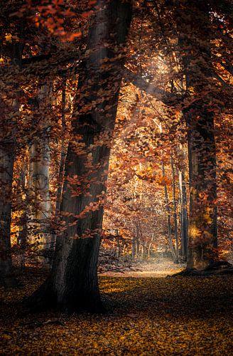 Herfstsfeer van