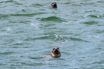 Robbenjagd im Wattenmeer von Merijn Loch
