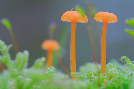 Kleine paddenstoelen op mosgrond