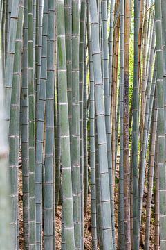 bamboebos van ton vogels
