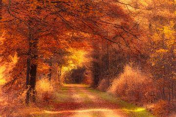 Gouden herfst licht valt op een bospad in Drenthe van Bas Meelker