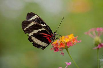 Vlinder von Marcel Kelfkens