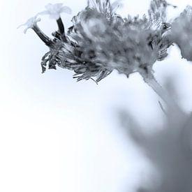 Fading Nature 9 van Pieter van Roijen