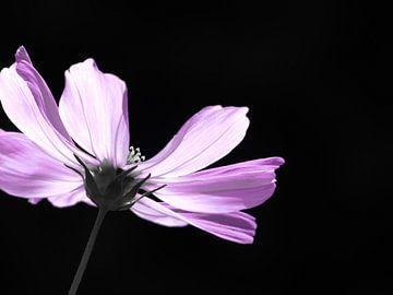 Pink lady van bird bee flower and tree