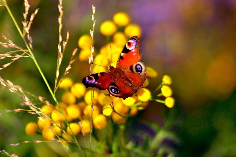 Herfstbloemen met pauwenvlinder van Silva Wischeropp