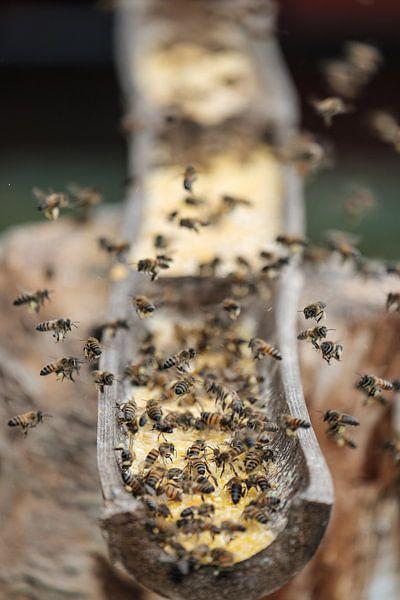Bezige bijen van Erwin Blekkenhorst