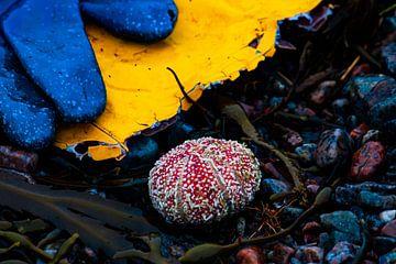 zee egel van Rob Coorens