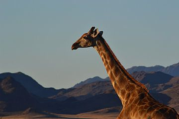 Giraffe von JTravel