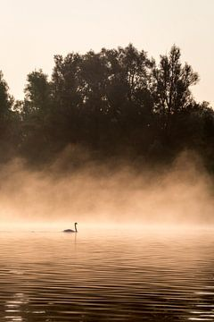 Zwaan met mist in de Biesbosch van Evelien Oerlemans
