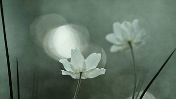 flower power von