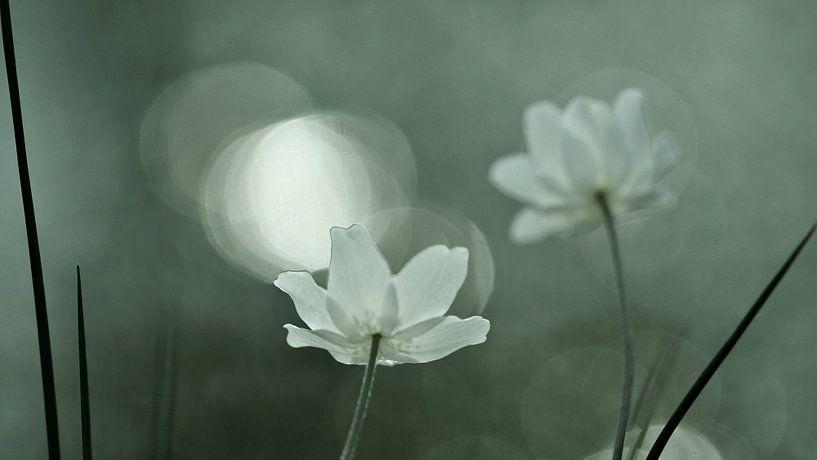 flower power van Annemieke van der Wiel