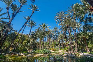 Botanische tuin Huerto del Cura  van