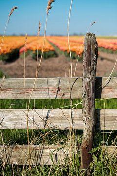Alter Zaun mit Tulpenfeld im Hintergrund von Pim Haring