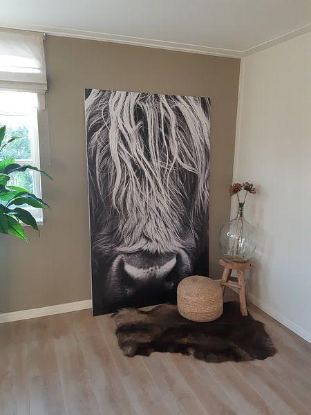 Klantfoto: Koe, Schotse Hooglanders, portret, closeup, schotland van Desiree Tibosch, op naadloos behang