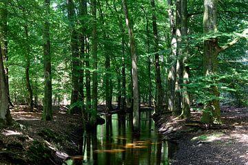 Un ruisseau à travers une forêt d'été sur Gerard de Zwaan