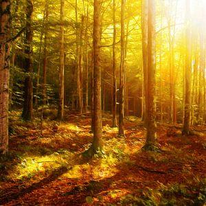 Verlichting scène in het bos van