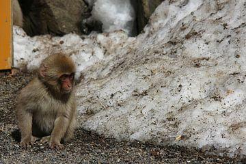 Baby snow monkey (Japanese macaque) van Ioanna Stavrakaki