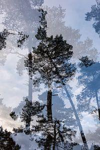 Dubbelbeeld boom nr. 4 van
