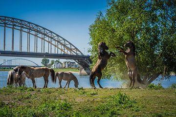 Spritzverhalten Nijmegen Waalbrug von Jos van de Pas
