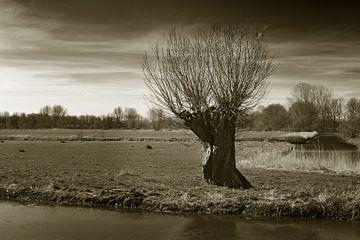 Knotwilg in polderlandschap von Georges Hoeberechts