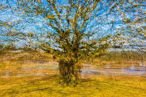 Vincent van Gogh boom van