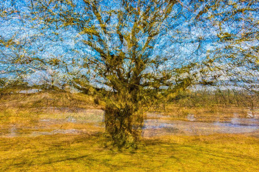 Van Gogh Behang : Vincent van gogh boom van marjan van herpen op canvas behang en meer