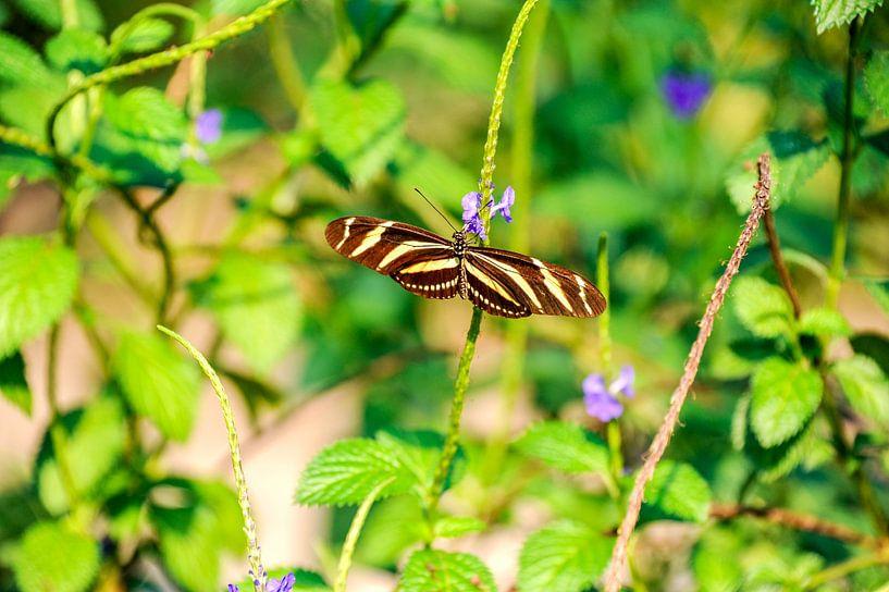 Vlinder van Jamy Danen