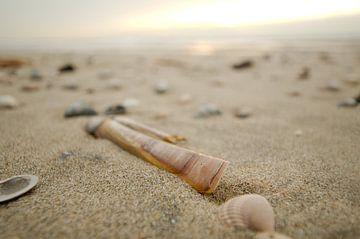 Schelpen op het Texelse strand van Wim van der Geest
