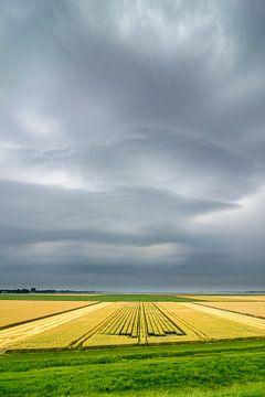 Zomerstorm van Sjoerd van der Wal