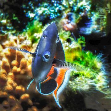Oceanium : Diergaarde Blijdorp van Loek Lobel