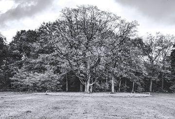 Der königliche Baum von Anne Raafs