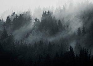 Oostenrijkse bossen van Richard Driessen