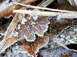 Bladeren in de winter met rijp.Leaves in winter with hoarfrost.Blätter im Winter mit Raureif.Feuille van Evelien Brouwer