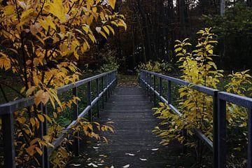 Bridge van Carlien Hartgerink