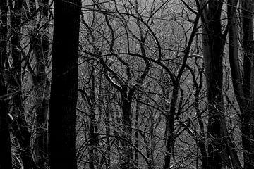 Wald im Vorfrühling von Thomas Jäger