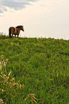 Horse van Petra ter Veer