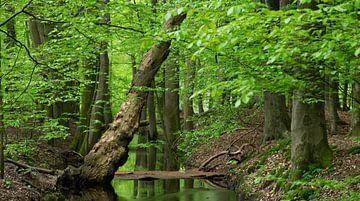 Le ruisseau Hierden dans sa splendeur printanière sur Michel Knikker