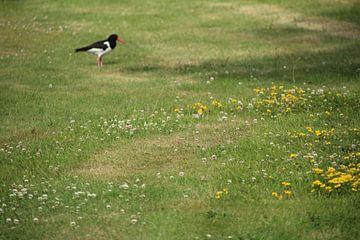 vogel in het veld van Danielle Vd wegen