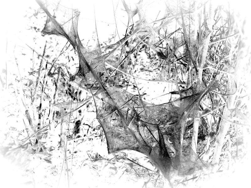 Caterpillar 5 van Jon Houkes