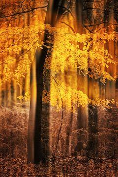Herbstliche Bäume von Ingrid Van Damme fotografie