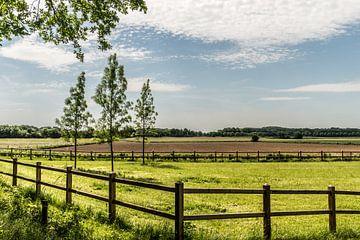 Landschap in Echt-Susteren, Nederlands Limburg van Martine Dignef