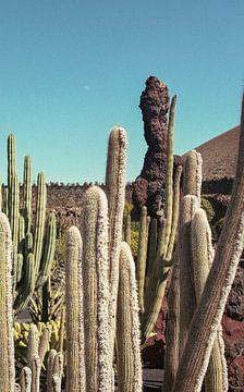 Kaktusgarten mit Mond von Karlijne Geudens