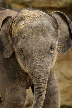 olifantje van Jaap Voets