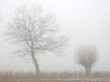 zwei Bäume im Nebel, Eiche und Weide von Joke te Grotenhuis