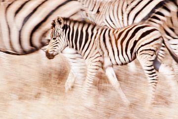 Een zebras verdediging  van