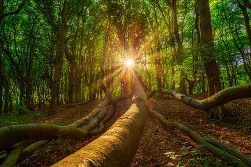 Sonnenstrahlen im Märchenwald von Björn van den Berg