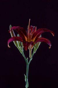 Amour, perfection, couleur en une seule image sur Tosca Dekker - Fleury