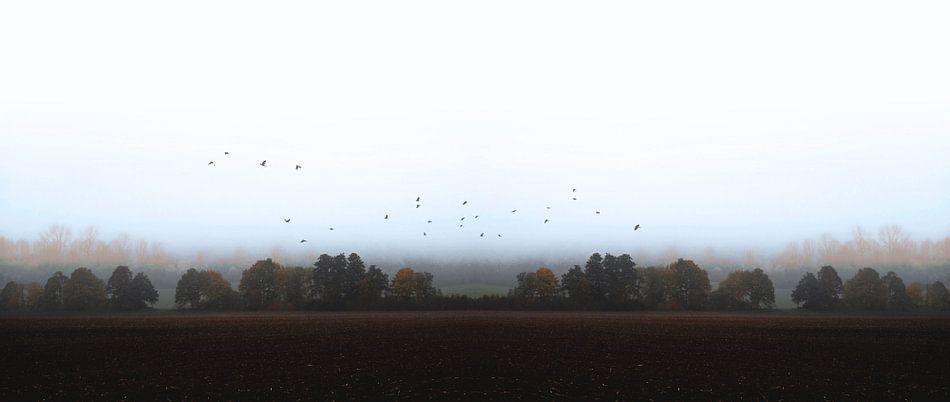MISTY OCTOBER DAY-VI